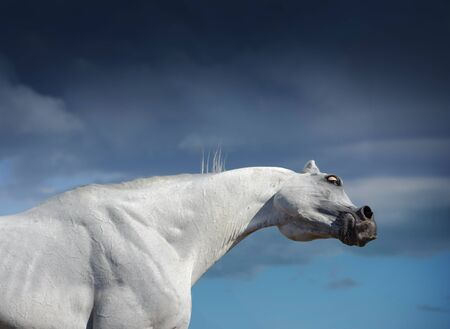 white horse portrait on blue sky background