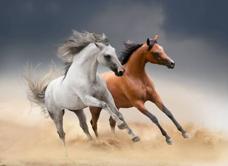 two horses running in desert