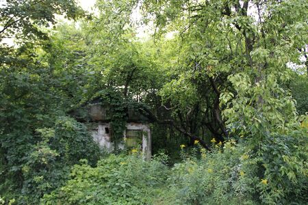 old abandoned little house in the woods