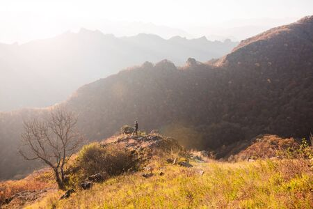 Sunrise. Climbing, beautiful view of the mountains. A woman and two dogs are nearby. Orange hue.