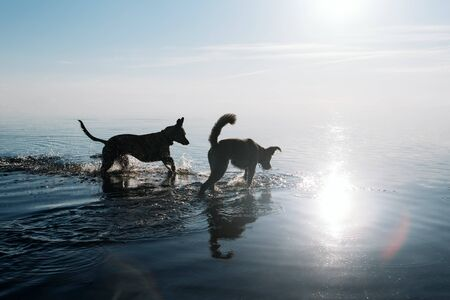 Two funny friendly dogs are swimming in the water.