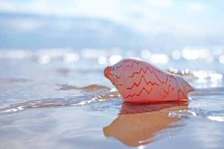 pink seashell on the sea bokeh shining background