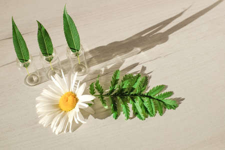 Bottles with green leaves and chamomile with sunlight effect on wooden background Stock Photo
