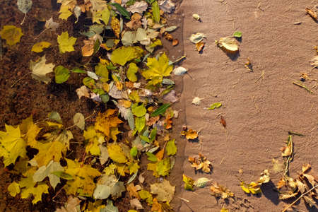 Sand and water with colourful fall leaves, nature background