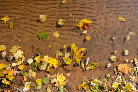 Fall leaves on water and under water, nature background