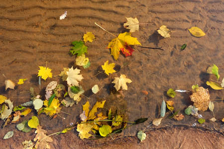 Fall leaves on water and under water, nature background Foto de archivo