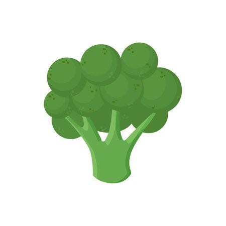 Ripe broccoli icon. Cartoon of ripe broccoli vector icon for web design isolated on white background. Vector illustration