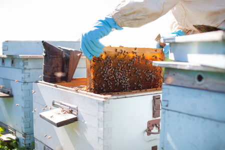 Beekeeper on apiary. Beekeeper is working with bees and beehives on the apiary. Standard-Bild