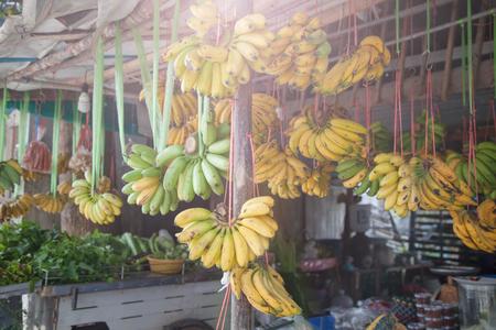 Sweet tropical fruit with green flesh. Ripe raw banana bunch in sunlight
