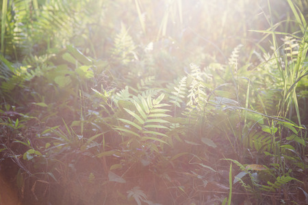 Rays of summer sun. Green grass. Solar glare, background.