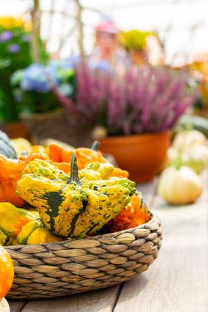 Vertical still life, autumn paint crop festival. Striped pumpkin crown star in a wicker bowl. Flowers and vegetables, garden decor