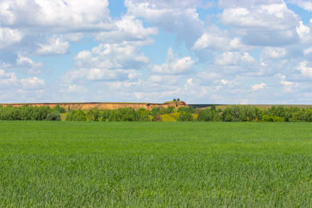 Sunny summer landscape, green wheat field, cloudy sky, sand pit on the horizon. Countryside background wallpaper banner