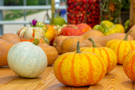 Bright ripe orange white pumpkins harvesting a farm crop. Fresh pumpkin vegetable on a wooden table, set of different varieties, gourd, squash. Vegan and Vegetarian Food