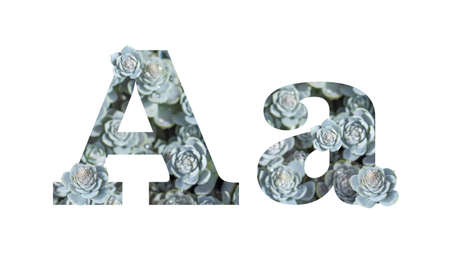 Letter A uppercase and lowercase isolated on a white background. English alphabet decorated against a background of Downhill Chinese Dunse Cap Crassula with flowers sprouts and dew drops