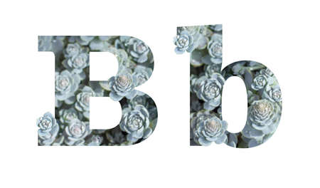 Lowercase and uppercase letter B is isolated on a white background. English Alphabet Decorated with Downhill Chinese Dunse Cap Crassula Isolate