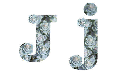 Letter J uppercase and lowercase isolated on a white background. English alphabet decorated against a background of Downhill Chinese Dunse Cap Crassula