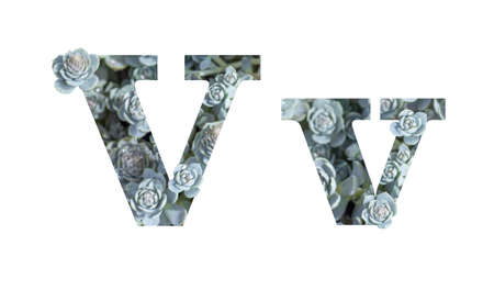 Letter V latin alphabet lowercase and uppercase isolated on white. Letter gray silver patterned plant succulent isolate