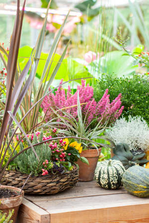 Autumn still life with farm flowers and vegetables. Harvest Festival. Chrysanthemum bush, erica blossom heather and striped pumpkin. Vertical photo postcard Imagens