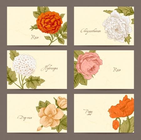 dull: Conjunto de la vendimia floral tarjetas de negocio horizontales