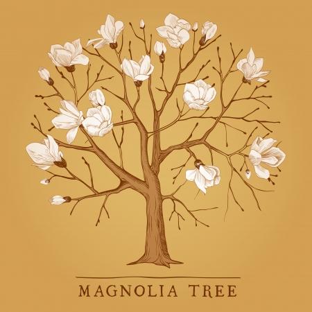 開花のマグノリアのビンテージ ツリー  イラスト・ベクター素材