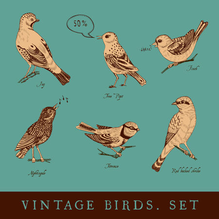 bird nightingale: Set of vintage bird on the emerald background