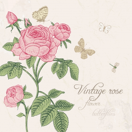 Vintage vector card with blossoming pink rose with dragonfly and white butterflies on a light gray background. Classic. Vector