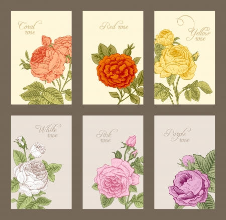vertical garden: Set of vintage vertical label with flowering garden roses