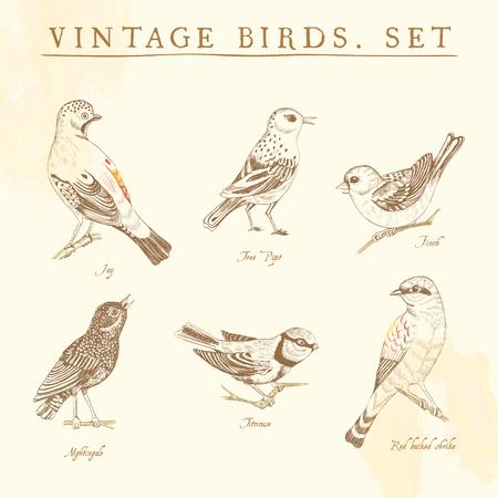 bird nightingale: Set of vintage birds