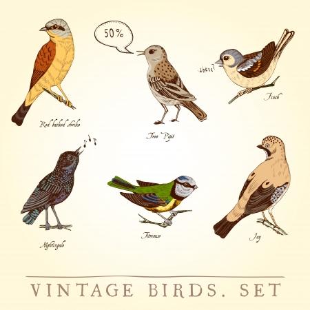 ruiseñor: Conjunto de pájaros de colores clásicos