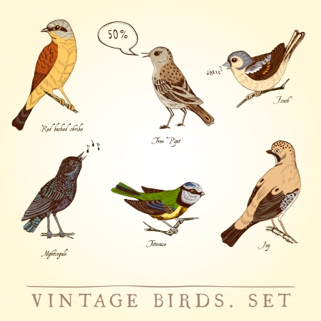 bird nightingale: Set of vintage colored birds