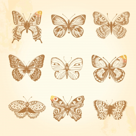 Set of vintage butterflies. 9 beautiful brown butterfly on a beige background. Vector illustration. Illustration