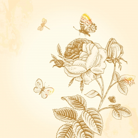 Sketch vintage garden bush blossoming roses in bud with insects on a beige background Illustration