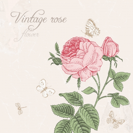 Vintage background with blooming pink rose with dragonfly and white butterflies on a light gray background Vector