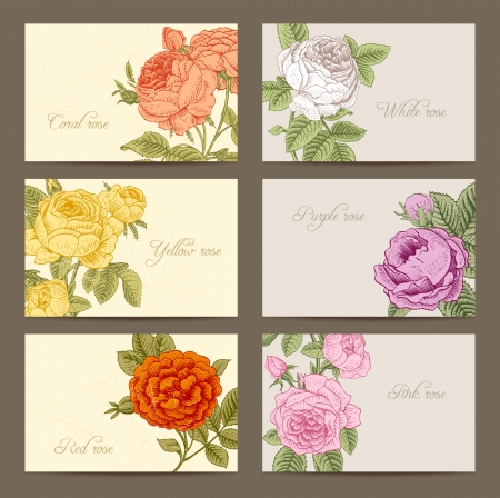 flower drawings: Set of vintage horizontal business cards with flowering garden roses