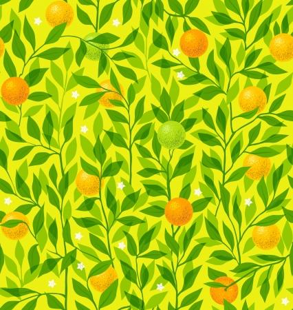 citrus tree: Seamless vector pattern summer with an orange tree Illustration