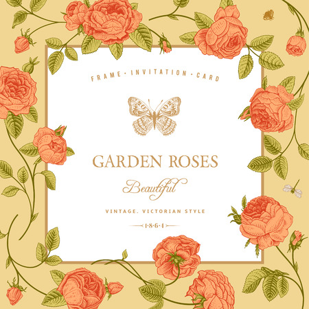 Vintage card with beautiful coral garden roses on a beige background Vector