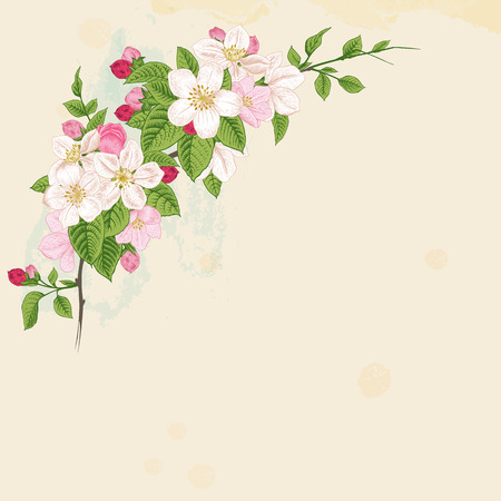 Branch blossoming apple  White and pink flowers with green leaves on a beige background  Vintage Victorian spring card  Vector illustration