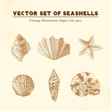 Set van vector vintage schelpen Vijf afbeeldingen van schelpen en zeesterren op een beige achtergrond