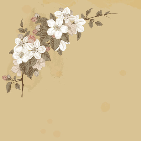 Branch blossoming apple. White and pink flowers with gray leaves on a beige background. Vintage Victorian spring card. Vector illustration.