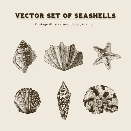 Set of vector vintage seashells  Five illustrations of shells and starfish on a beige background  Ilustração