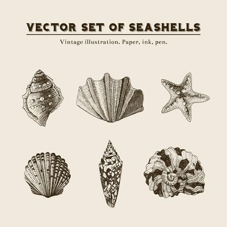 beige stof: Set van vector vintage schelpen Vijf afbeeldingen van schelpen en zeesterren op een beige achtergrond