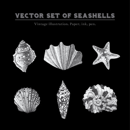 sea star: Set of vector vintage seashells  Five black and white illustrations of shells and starfish on a black background