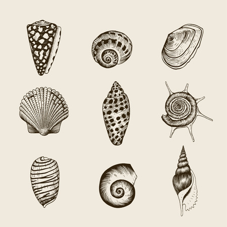 Set of vector vintage seashells  Nine black illustrations of shells on a beige background