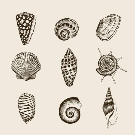 Set of vector vintage seashells Nine black illustrations of shells on a beige background