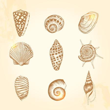 seashell: Set of vector vintage seashells  Nine brown illustrations of shells on a beige background