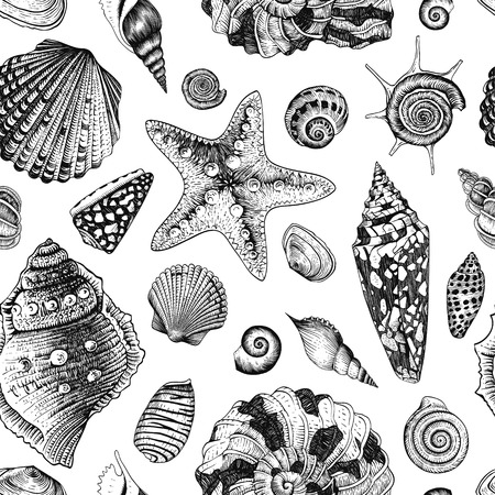 sea shells on beach: Vector seamless vintage pattern with black and white seashells on white background