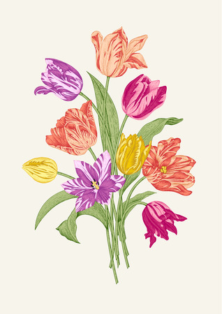 Bouquet of nine colorful tulips on gray background. Vector vintage element for design in the style of European botanical illustrations of the 19th century.