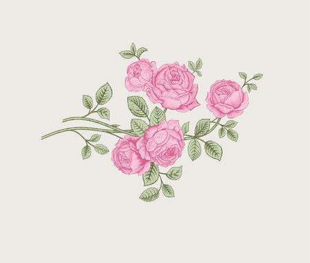 Floral composition. Branch bush pink rose garden. Vintage vector illustration. Design element. Иллюстрация