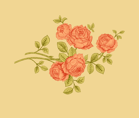 Coral Garden Rose 313 coral garden stock illustrations, cliparts and royalty free