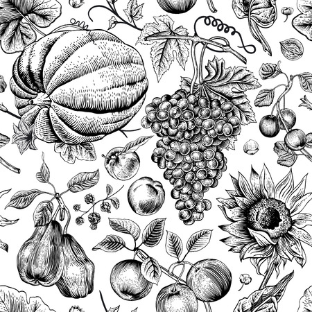 Autumn harvest. Black pumpkin, sunflower, nuts and fruit on a white background. Vector seamless vintage pattern. Monochrome.
